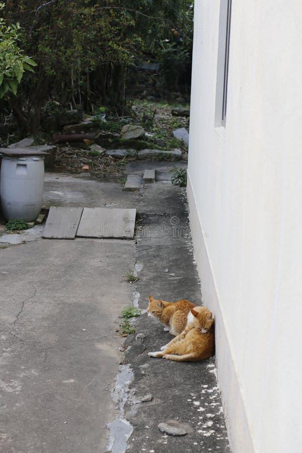 Tillfälliga katter royaltyfria foton