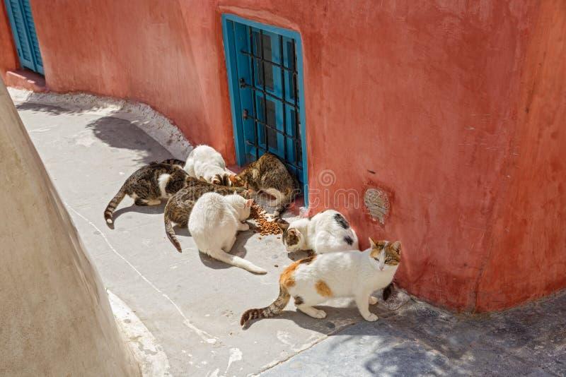 Tillfälliga katter som äter torr mat royaltyfria bilder