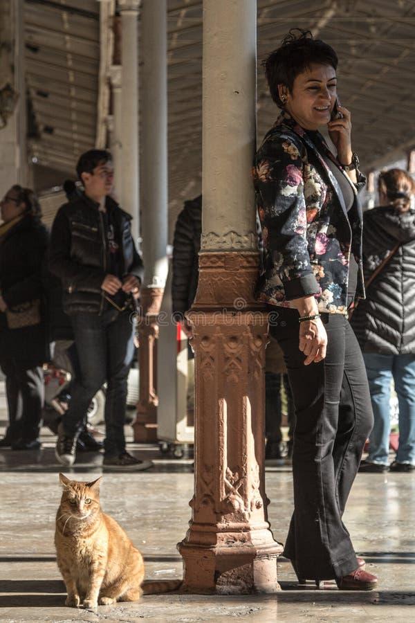 Tillfälligt ljust rödbrun kattsammanträde på plattformen av den Sirkeci drevstationen bredvid en affärskvinna som använder hennes royaltyfri fotografi