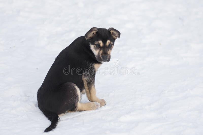 Tillfälligt svart valpsammanträde på en snö arkivfoto