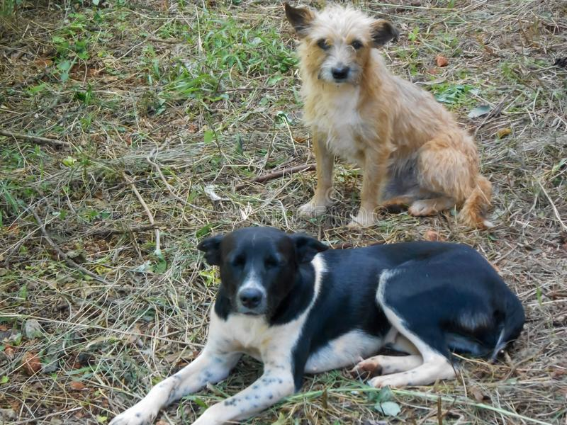 Tillsammans gullig byracka och Terrier fotografering för bildbyråer