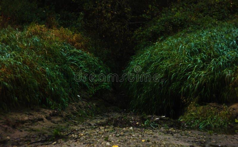Tillträde till den mörka mystiska skogen med långt gräs från båda sidor arkivfoto