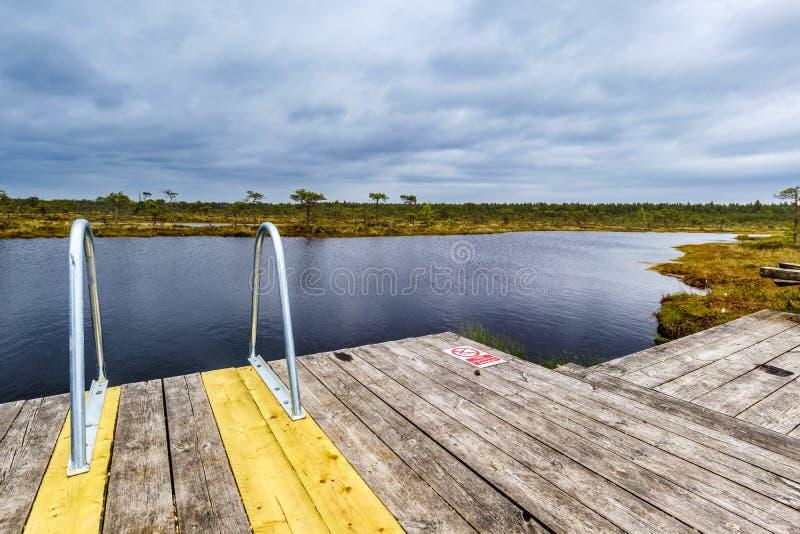 Tillträde till en sjö i myren av den Soomaa nationalparken, Estland royaltyfri bild
