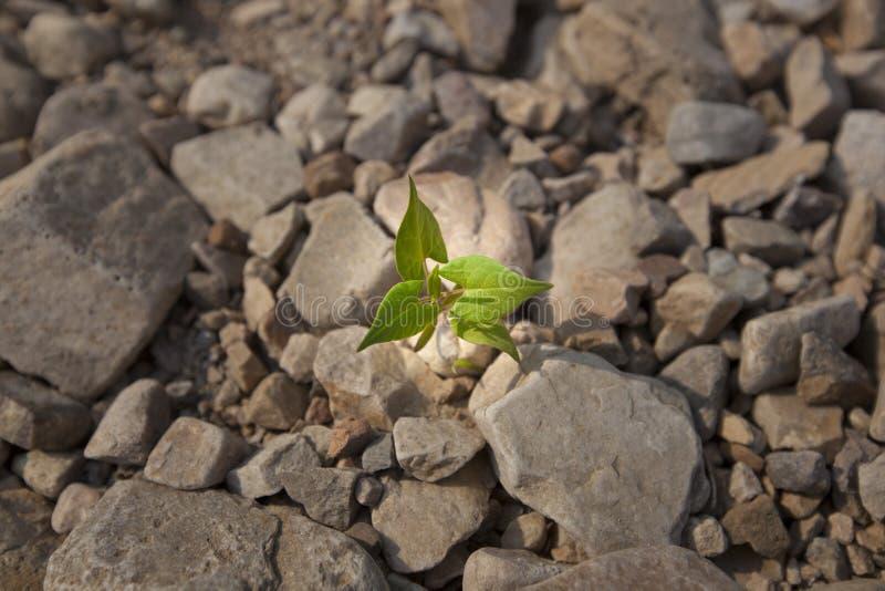 Tillväxt av små plantor royaltyfri bild
