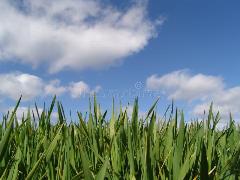 tillväxtspringtime arkivfoto