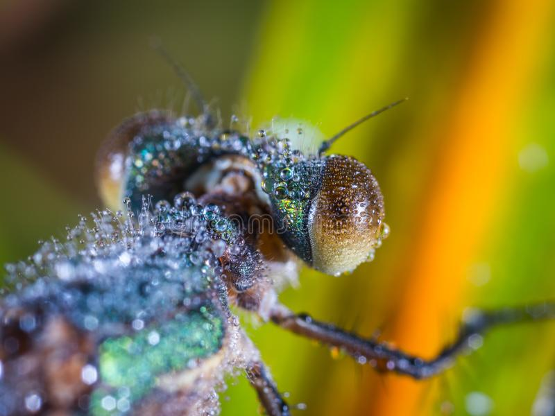 Tilt Shift Lens Photography of Brown and Black Insect royalty free stock images