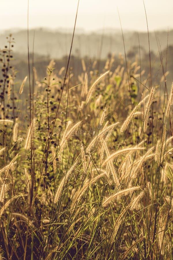 Tilt Shift Photo of Grass Fields stock images