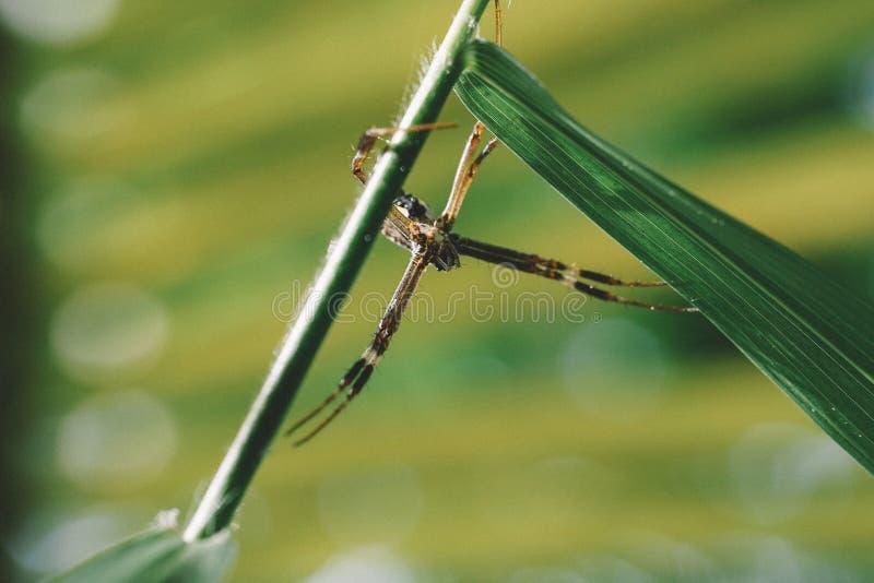 Tilt Shift Photo Of Yellow Garden Spider Free Public Domain Cc0 Image