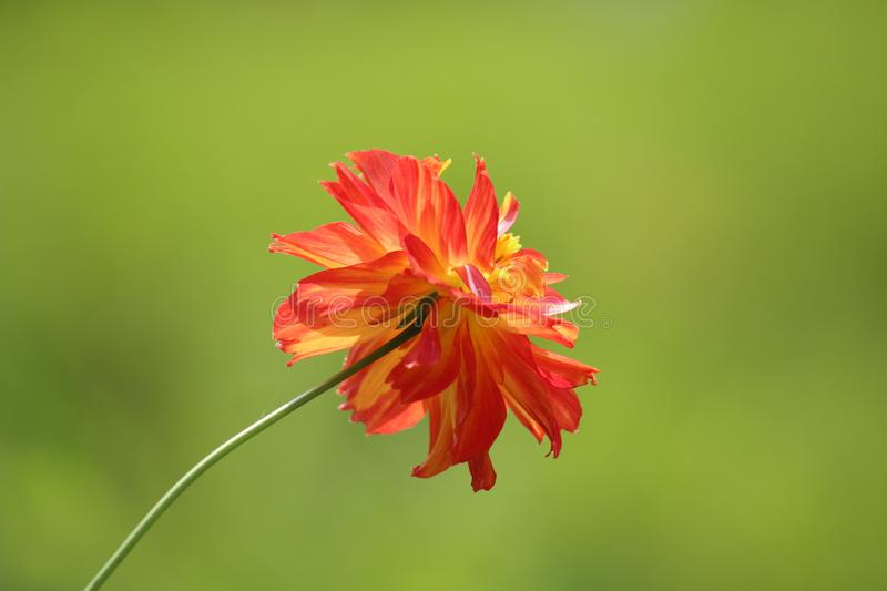 Tilt Shift Photography of Red and Yellow Flower stock photos