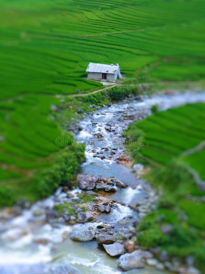 Tilt Shift Of a Rice Farm. Near A River In Mountains Of Sapa In North Of Vietnam royalty free stock image