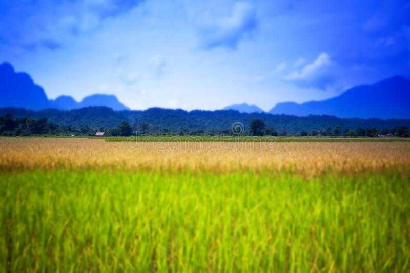 Tilt-Shift Style 3. Rice terrace and mountains on a horizon, Loas, Tilt-Shift Style stock photos