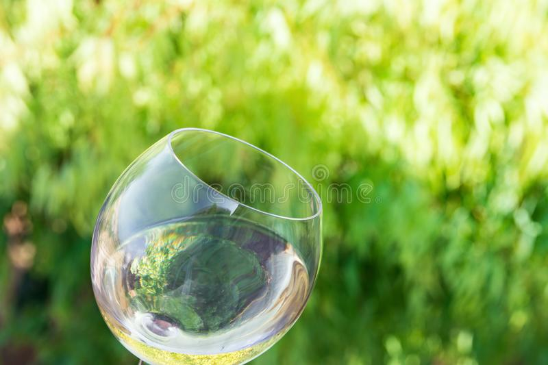 Tilted glass of white dry wine on green foliage vines background. Authentic lifestyle image. Relaxation indulgence gourmet. Poster with copy space stock photos