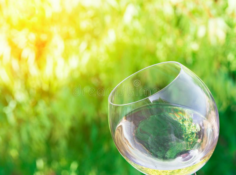 Tilted glass of white dry wine on green foliage vines background. Golden sunlight. Authentic lifestyle image. Relaxation indulgence gourmet concept. Poster royalty free stock photos