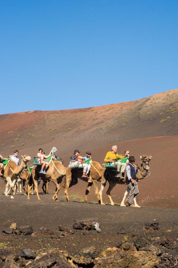 Timanfaya全国Parque,兰萨罗特岛,西班牙- 02 15 2019年:骆驼游览在Montanas del开火 免版税库存照片