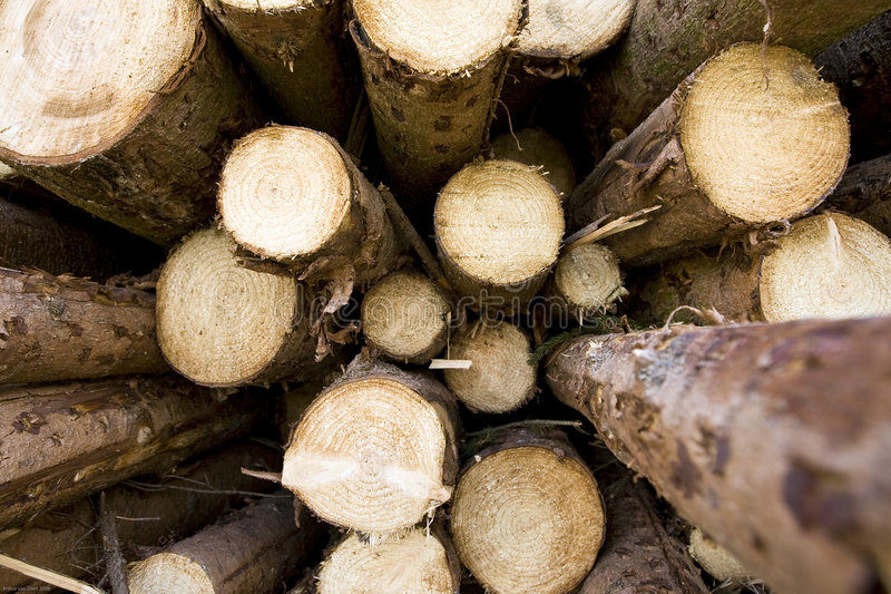 Download Timber stock image. Image of forest, woodpile, tree, sawed - 4822693