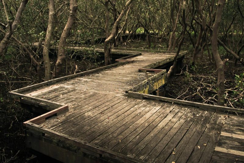 Download Timber Boardwalk Through Dark Mangroves Stock Photo - Image: 21995138