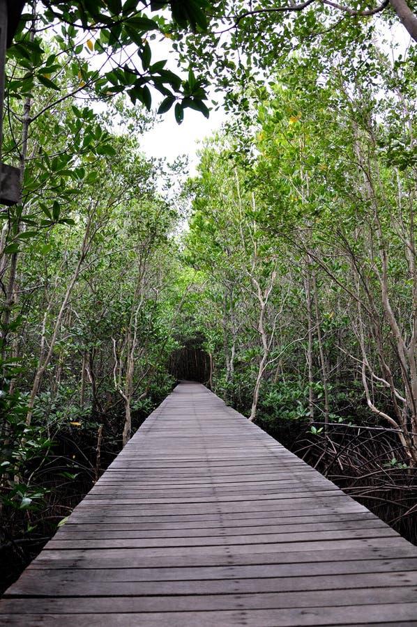 Timber Bridge royalty free stock photos