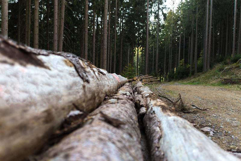 Timber in the forest background royalty free stock images
