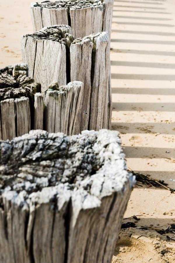 Timber groynes на пляже на Северном море стоковое фото rf