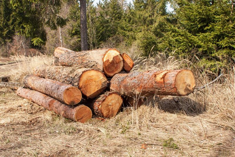 Timber harvesting in the forest. A pile of felled pine trees. Timber industry. royalty free stock photos