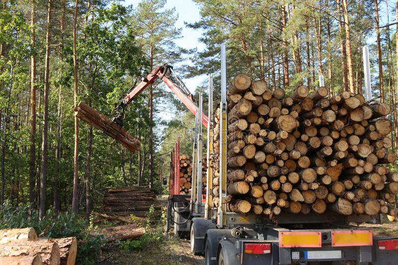 Timber harvesting and transportation in forest. royalty free stock image