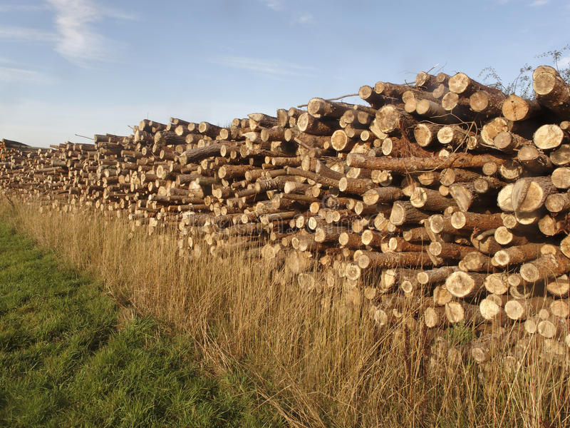 Download Timber stock image. Image of posts, forest, piled, logs - 32163201