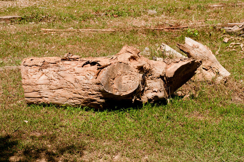 Timber left to rot royalty free stock photo