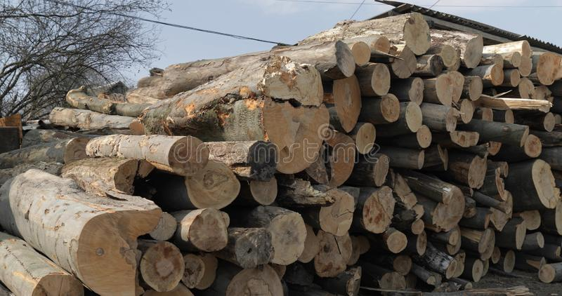 Timber logging. Freshly cut tree wooden logs piled up. Wood storage for industry.  stock photos