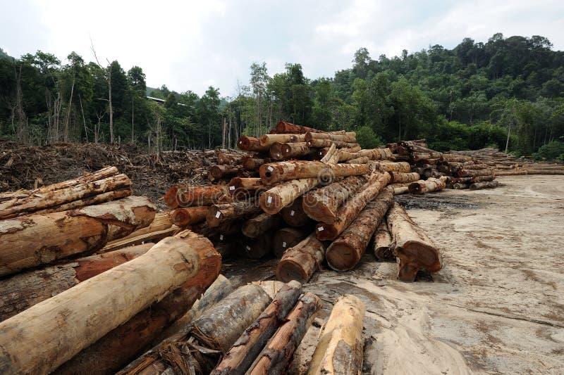 Timber logs. At forest near Kampung Lasah, Sungai Siput, Perak, Malaysia stock photography