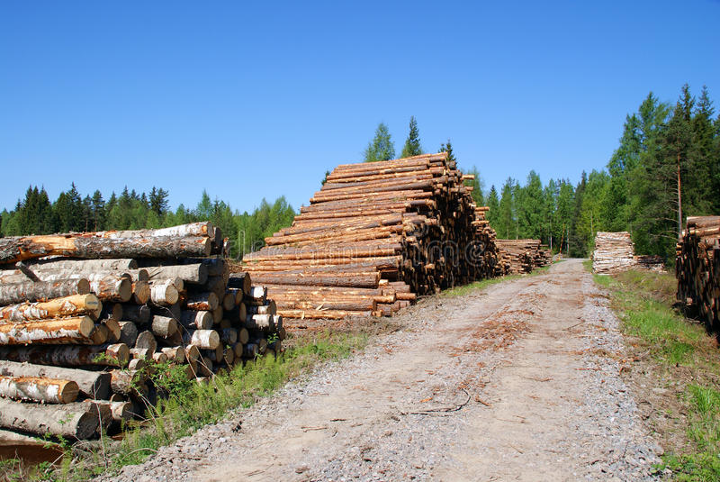 Timber Logs By Forest Road stock photo