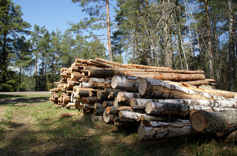 Timber Logs Stacked in Spring Forest royalty free stock photo