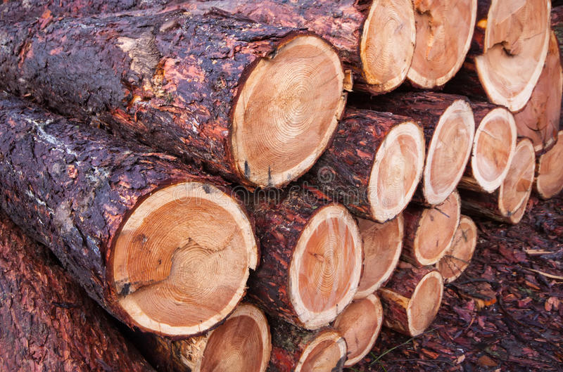 Download Timber pattern stock image. Image of waste, wilderness - 39512161
