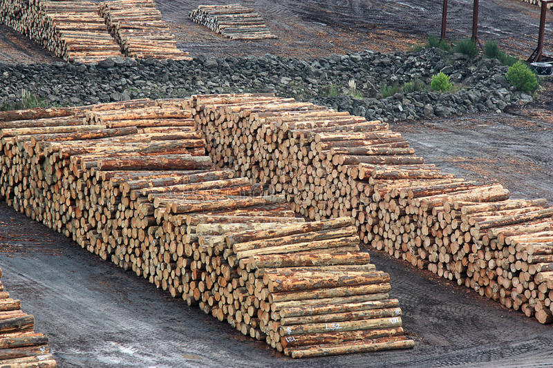 Pile Of Timber : Timber pile stock image of outdoor dirt