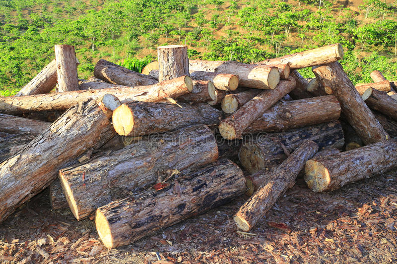 Timber ready for transport stock image