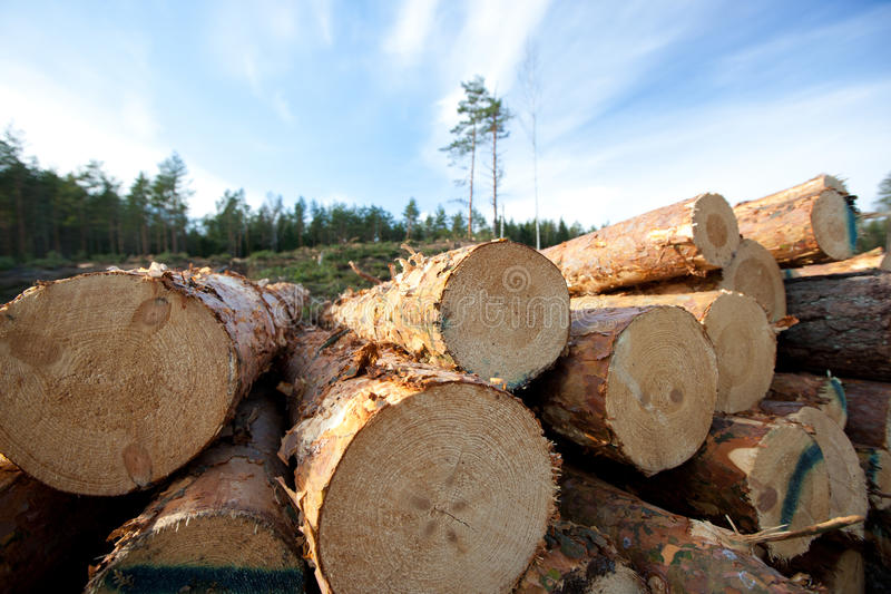 Timber Resources Royalty Free Stock Images