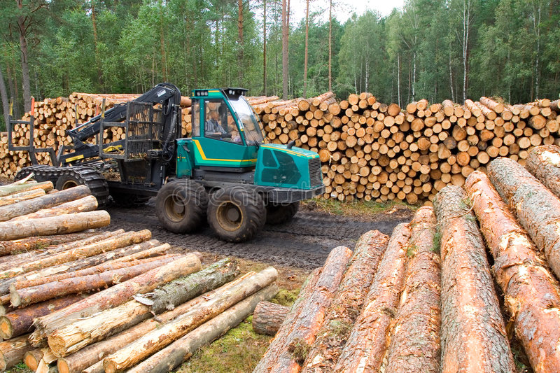 Download Timber resources stock image. Image of deforestation, construction - 3095017