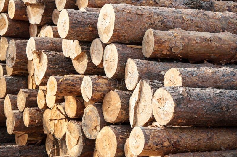 Timber Or Saw Timber Stock Photo Image 44872387