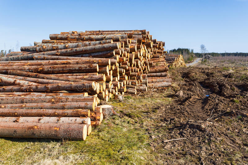 Timber Stack. At a clearcut area stock images