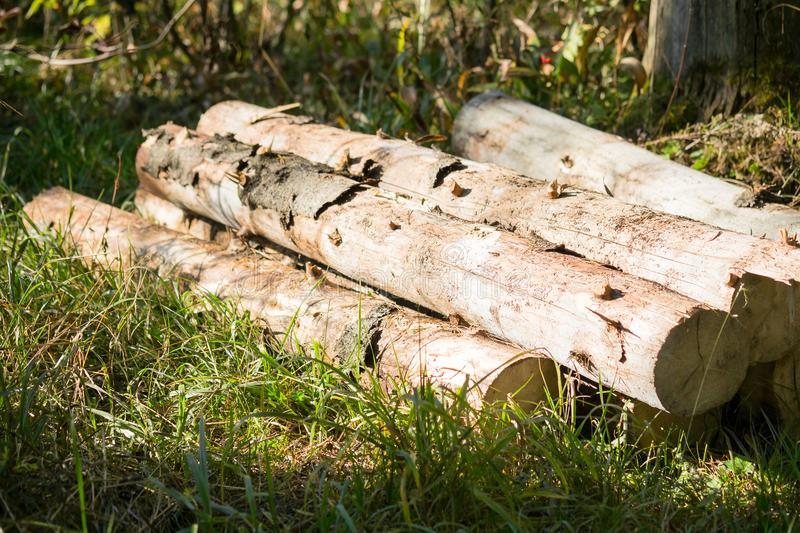 View of small heap of roundwood logs on the sunny clearing, Russia. Timber is a valuable renewable natural resource for industry construction. View of small royalty free stock image
