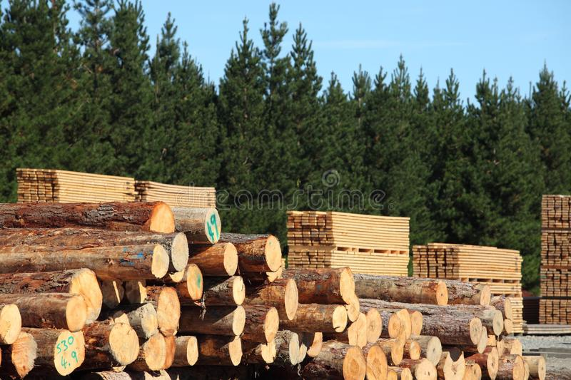 Timber yard and forest stock photography