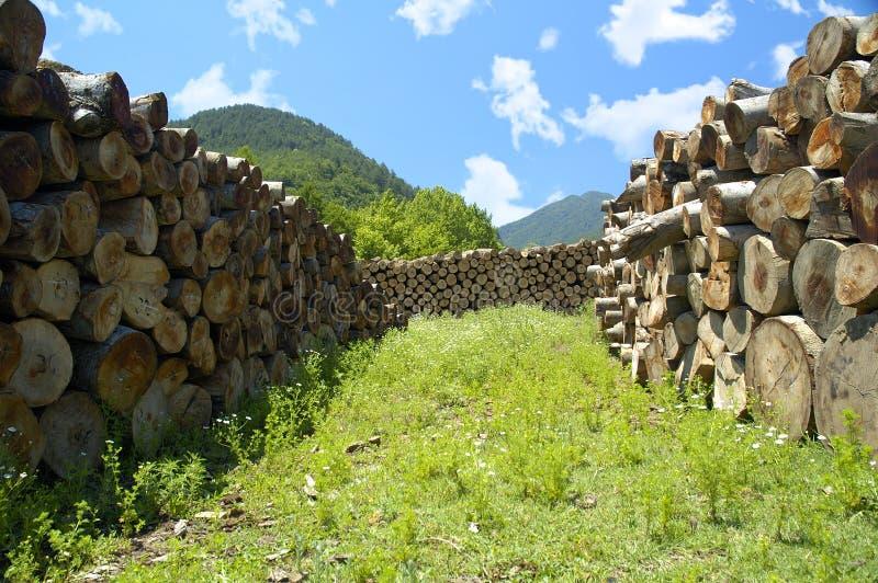 Timberland Photo stock