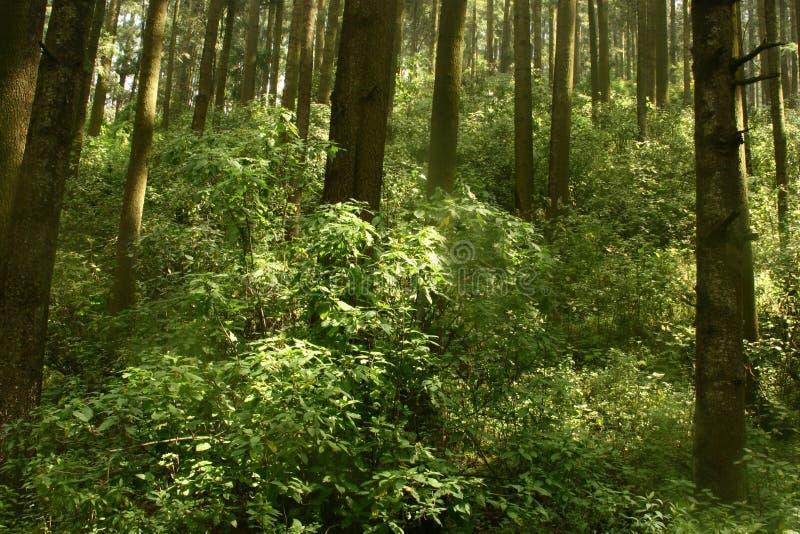 Timberland royalty-vrije stock afbeelding