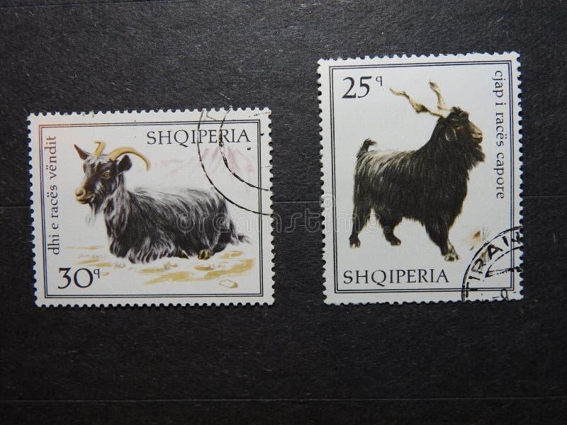 Timbres-poste albanais avec des chèvres photo libre de droits
