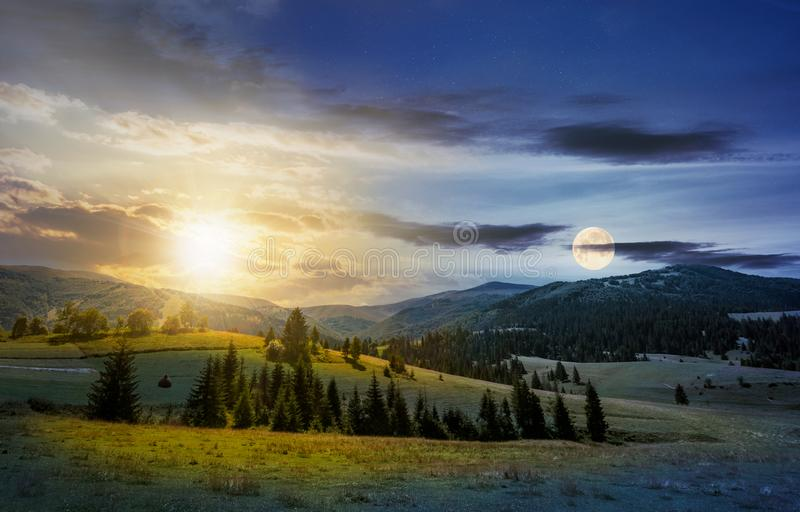Time change over the countryside summer landscape. Spruce trees on a rolling grassy hills at the foot of Borzhava mountain ridge. Fine weather with some clouds royalty free stock images