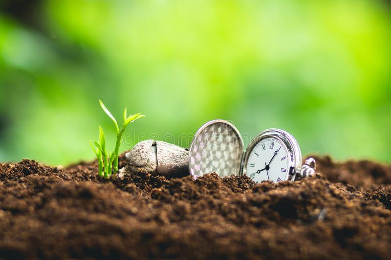 Time and growth the seed Planting seeds Protect the Sapling Sapodilla tree stock image