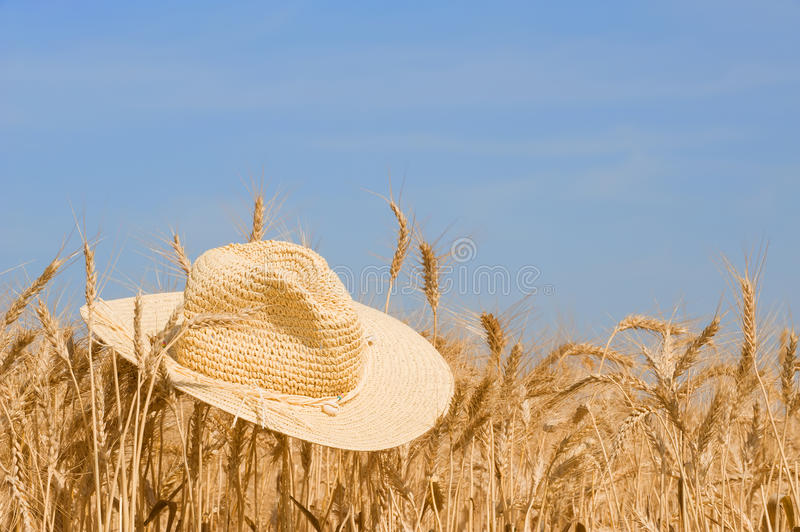 Time for harvest royalty free stock photography