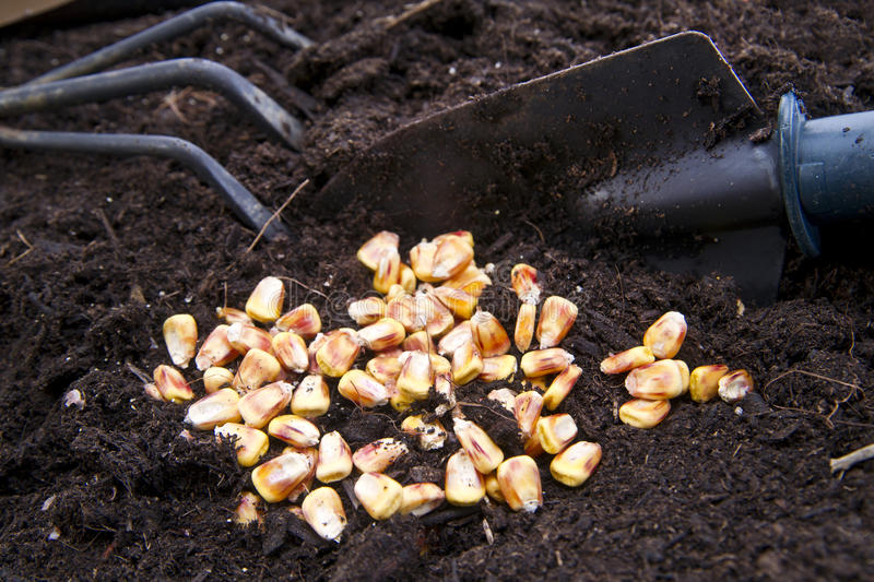 Time Of Sowing Stock Image