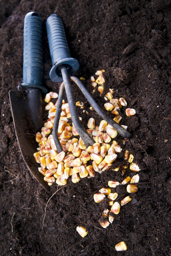 Download Time Of Sowing stock image. Image of time, sweat, wheat - 31359295
