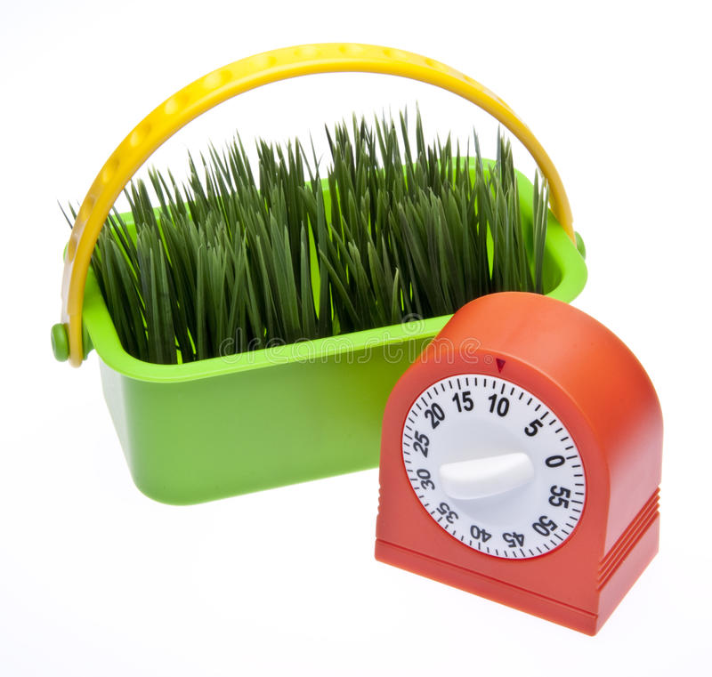 Download Time for Spring stock image. Image of nobody, faith, plant - 13076643