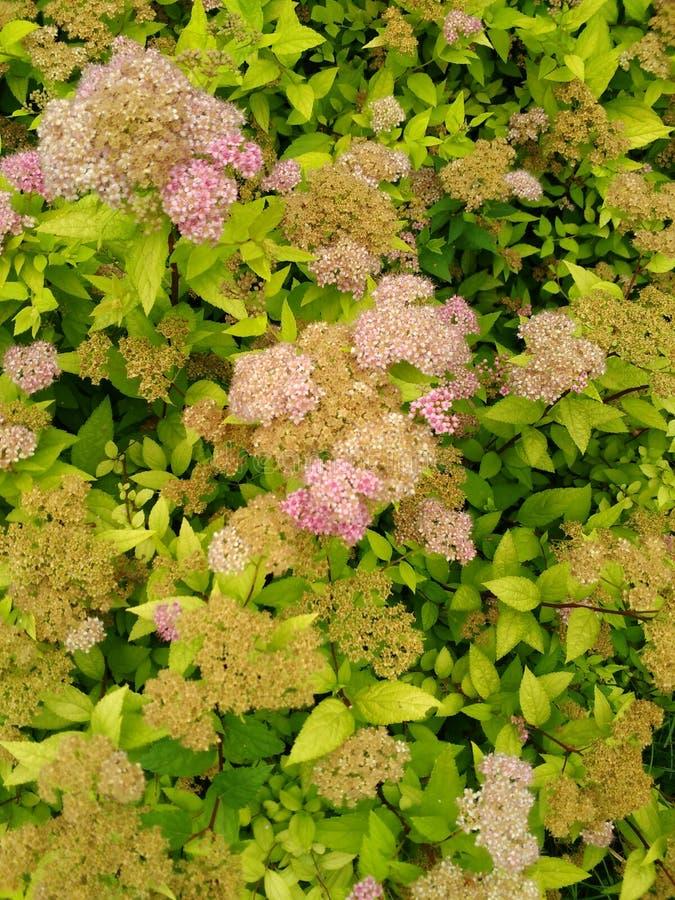 Flowers Pennsylvania stock image